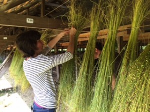 Jo hangs the flax to dry